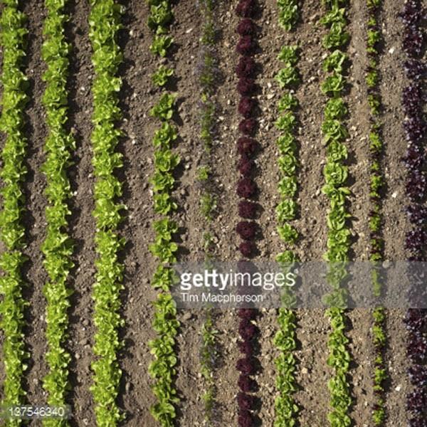 crop image600